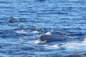 母子クジラ