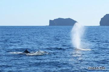 母子クジラ+エスコート